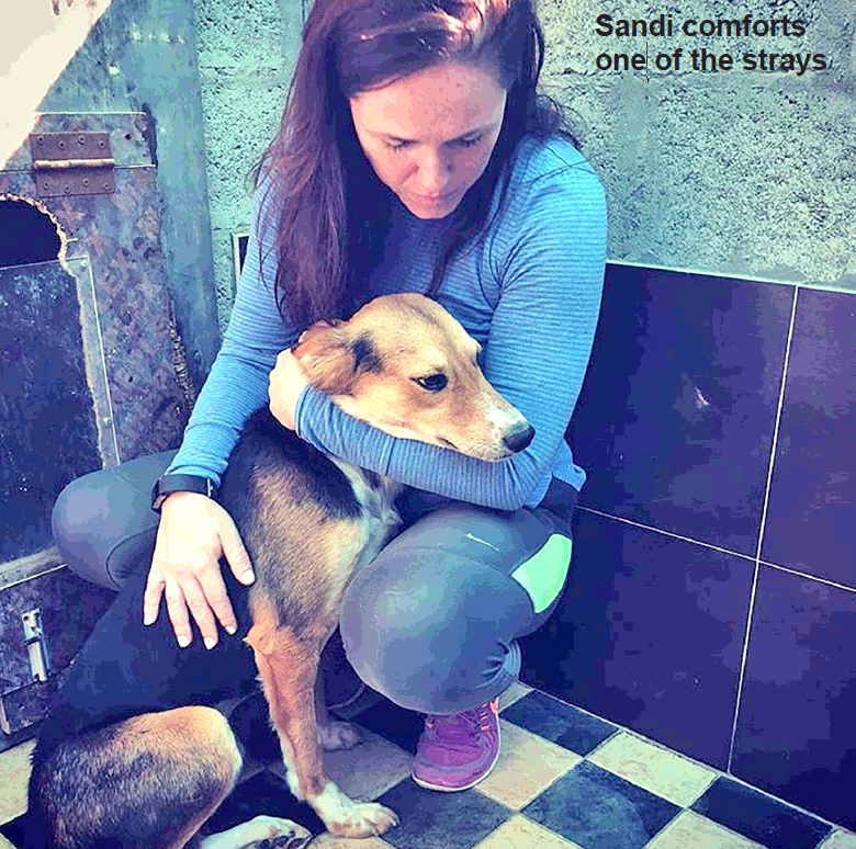 Gulf Weekly Animal appeal