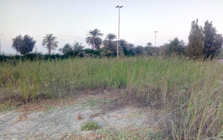 Gulf Weekly Grow forest grow!